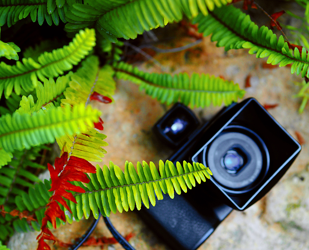 Ricoh GR II : a long-term review & final thoughts - the